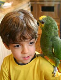 Birds Bird Care Pet Care Kids Pets