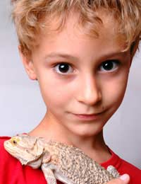 Reptile Reptile Care Lizards Snakes Cold