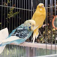 Pet Bird Birds Pet Care Bird Care Bird